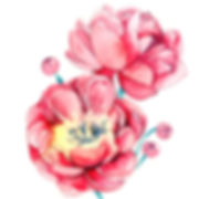 watercolour illustration, plants illustration, flower illustration, flowers illustration, floral illustration, flower warecolour illustration, floral watercolor, botanical watercolour, botanical illustration, flower painting, flower drawing, watercolour illustration, london illustrator, freelance illustrator, watercolour artist, anastasiya levashova, kava illustration, beautiful illustration, illustration 2017, london, uk, peony, peony painting, peony illustration, peony drawing, peony art, peony watercolour, pink peony,