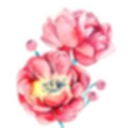 watercolour, watercolour illustration, watercolour illustrator, watercolour illustration uk, watercolour illustrator uk, freelance illustrator, freelance illustrator uk, fleelance illustrator london, illustrator uk, watercolour flowers illustration, watercolour flowers illustrator, flowers illustrator, peony painting, watercolour peony, peony illustration, peony, watercolour, live painting illustration, live painting illustration event, painting event harrods, painting event selfridges, illustration event, anastasiya levashova, anastasia levashova, levashova art, levashova, kava illustration, art, artist,
