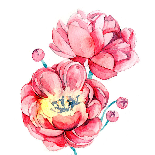 watercolour, watercolour illustration, watercolour illustrator, watercolour illustration uk, watercolour illustrator uk, freelance illustrator, freelance illustrator uk, fleelance illustrator london, illustrator uk, watercolour flowers illustration, watercolour flowers illustrator, flowers illustrator, peony painting, watercolour peony, peony illustration, peony, watercolour, live painting illustration, live painting illustration event, painting event harrods, painting event selfridges, illustration event, anastasiya levashova, anastasia levashova, levashova art, levashova, kava illustration, art, artist,
