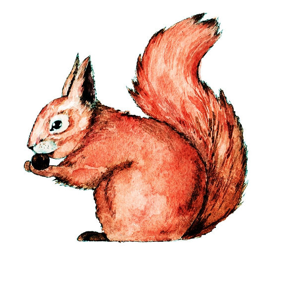 watercolour animals, watercolor animals, waterolour animal, animal illustration, animal watercolour illustration, illustration, illustrator, freelance illustrator, london illustrator, watercolour illustrator, freelance illustrator uk, watercolour illustrator uk, find an illustrator, illustration agency, detailed illustration, magazine illustration, editorial illustrator, animal illustration, squirrel illustration, squirrel watercolour,