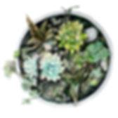 Watercolour illustrator, watercolour illustration, anastasiya levashova, london illustrator, uk illustrator, nature illustration, editorial illustrator, watercolour artist, watercolour painting, book illustrator, flower illustration, traditional watercolour illustrator, anastasia levashova, levashova art, art, illustration, illustrator, ukraine illustrator,