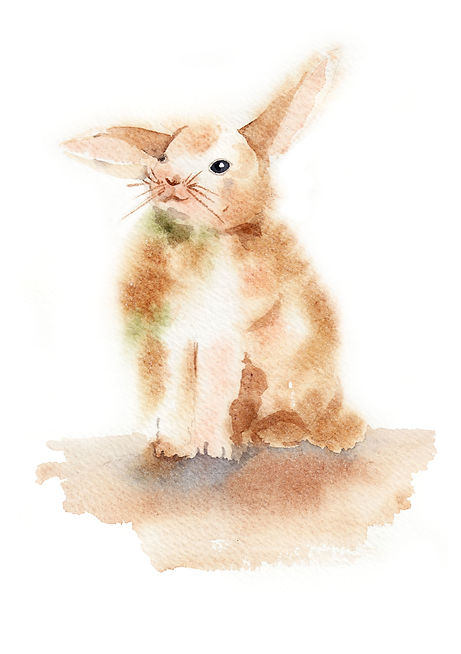 watercolour animals, watercolor animals, waterolour animal, animal illustration, animal watercolour illustration, illustration, illustrator, freelance illustrator, london illustrator, watercolour illustrator, freelance illustrator uk, watercolour illustrator uk, find an illustrator, illustration agency, detailed illustration, magazine illustration, editorial illustrator, rabbit, rabbit watercolour, rabbit illustration, watercolour rabbit,