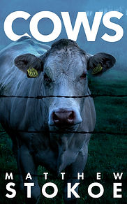 Cows by Matthew Stokoe