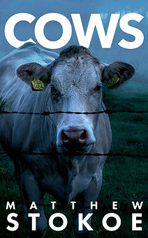 Cows by Matthew Stokoe writer
