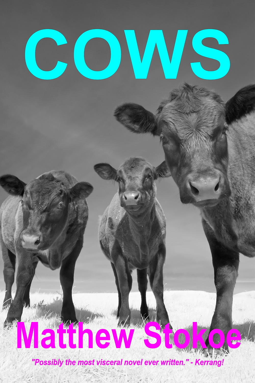 Cows  by Matthew Stokoe