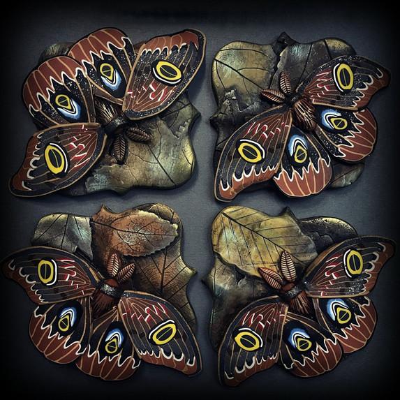Polyphenus Moths