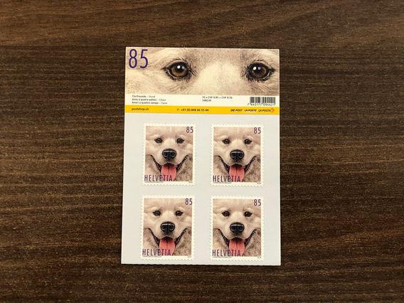 Tierfreunde Hund 2019