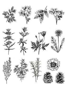 Brush Pen Plants
