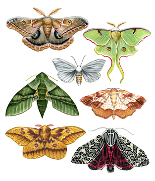 Gouache Moths