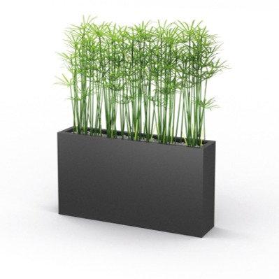 Plante PAPYRUS H. 127 cm