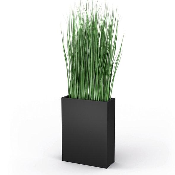 Plante Graminée folle H. 200 cm