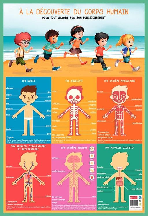 Poster PVC 76x52 cm le corps humain