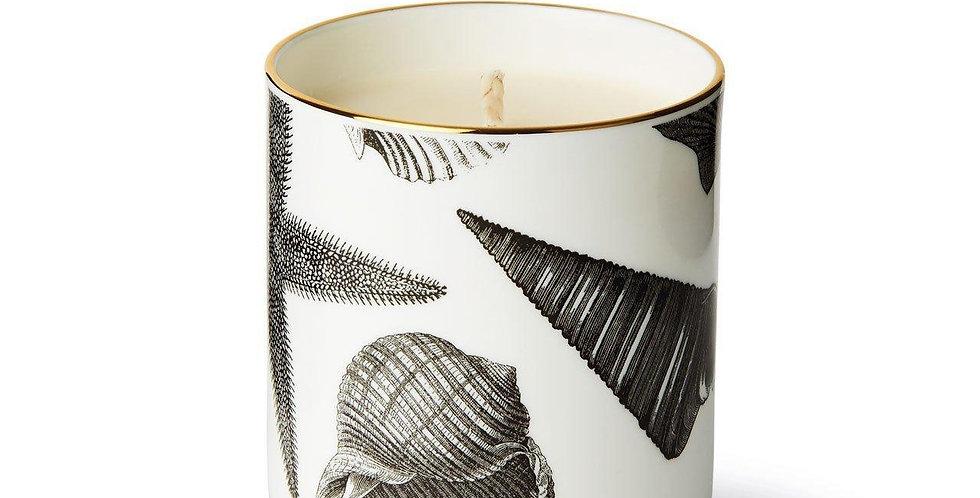 The Seashore Ceramic Luxury Scented Candle  - Chase & Wonder