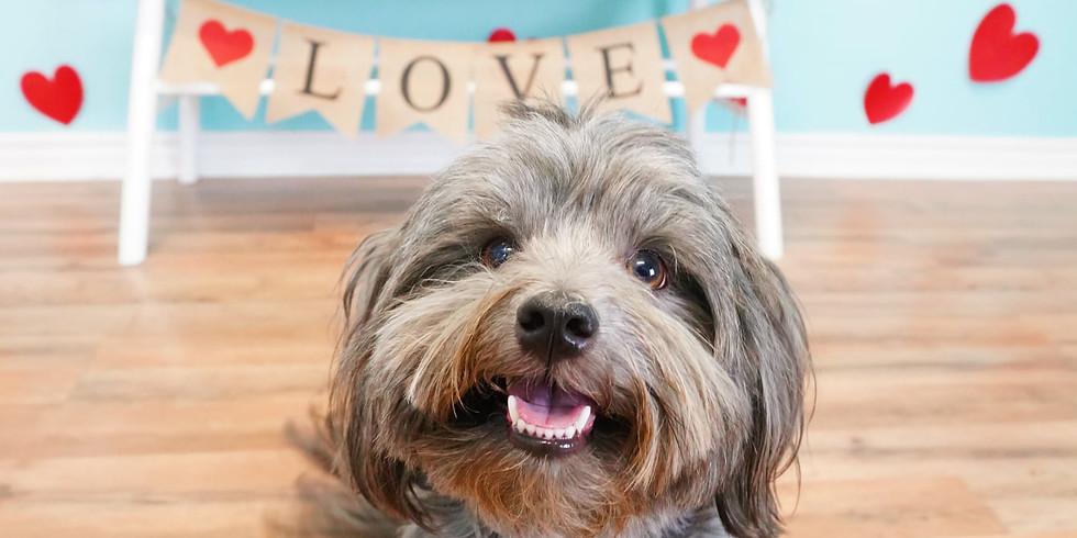 Valentine's Day Pawty!