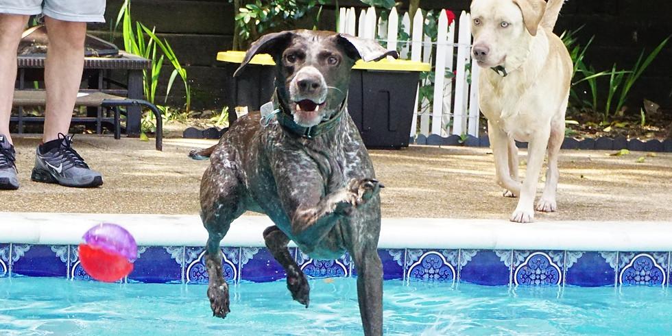 Pool Pawty!! Big Wild Fur-kids