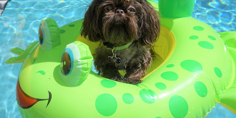 BOOKED!!  Pool Pawty!! (Small Fur-kids)