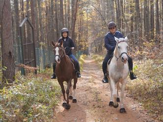 馬と心が通い合う素晴らしい体験