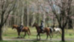裸馬騎乗会、エンデュランス、外乗