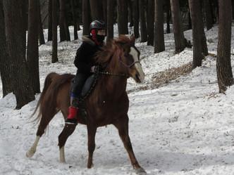 雪上裸馬駈歩に感激!