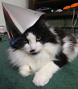 The Amazing Spaghetti has an amazing cat. The cat is ready for a party.