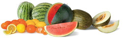 DFI-salad-fruit-produce-importer-UK2
