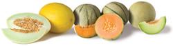 DFI-salad-fruit-produce-importer-UK3
