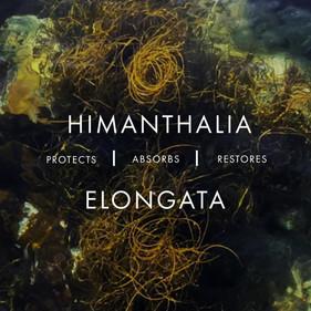 VOYA_himanthalia elongata.mp4
