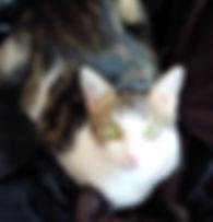 bijou chat, bijoux chat, bijou personalisé à strasbourg