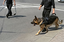 EXPLOSIVE / NARCOTICS DETECTION CANINES   Our Narcotic and Explosive Detection Canine Teams include a highly trained detection dog...