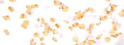 petalb.jpg