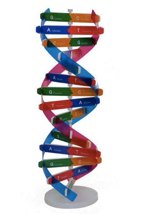 Modelo de ADN