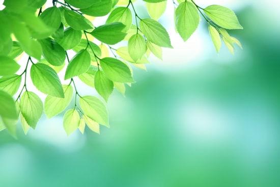 森4.jpg