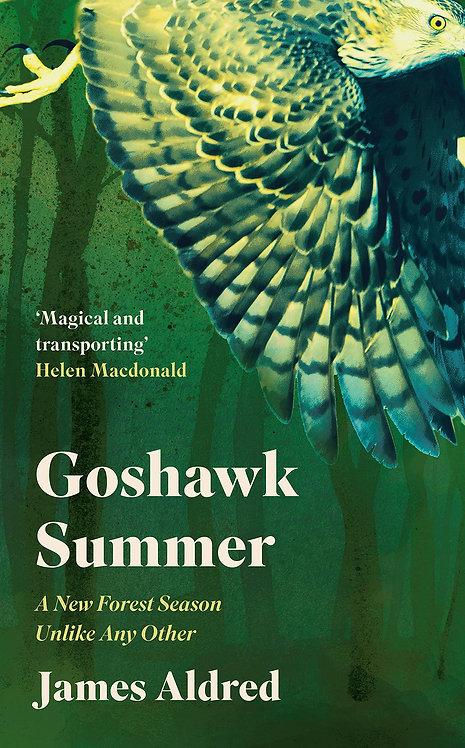 Goshawk Summer
