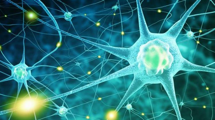 Neurons.3.jpg