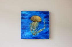 Jelly Fish 3