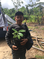 TierraVida   Ayahuasca Retreat Peru