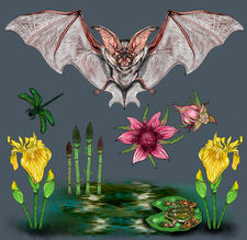 Courtney Blazon -  Spotted Bat in the Ninepipe