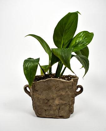 Stoneware Planter with Plant