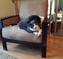 dog-catsm.jpg