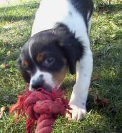 free-pup1