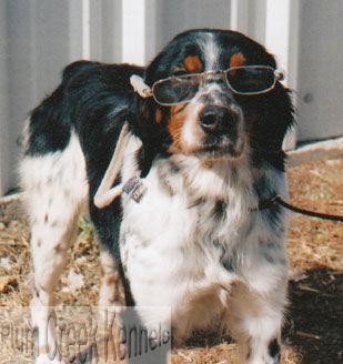 rang-glasses.jpg