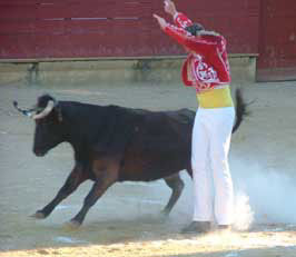 bullfight-web.jpg
