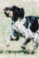 tango-quail.jpg