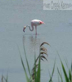 flamingosm.jpg
