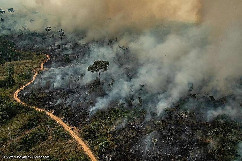 Fotografia aérea de uma área da floresta Amazônica coberta pela fumaça causada pelos incêndios