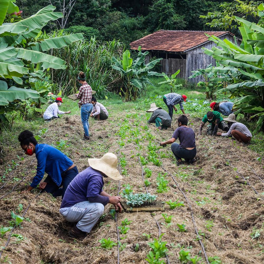 Fotografia de pessoas em uma área rural. Ao fundo da foto há uma cabana de madeira e há onze pessoas trabalhando em uma horta que já mostra alguns brotos. Ao redor existem vários pés de bananeira.