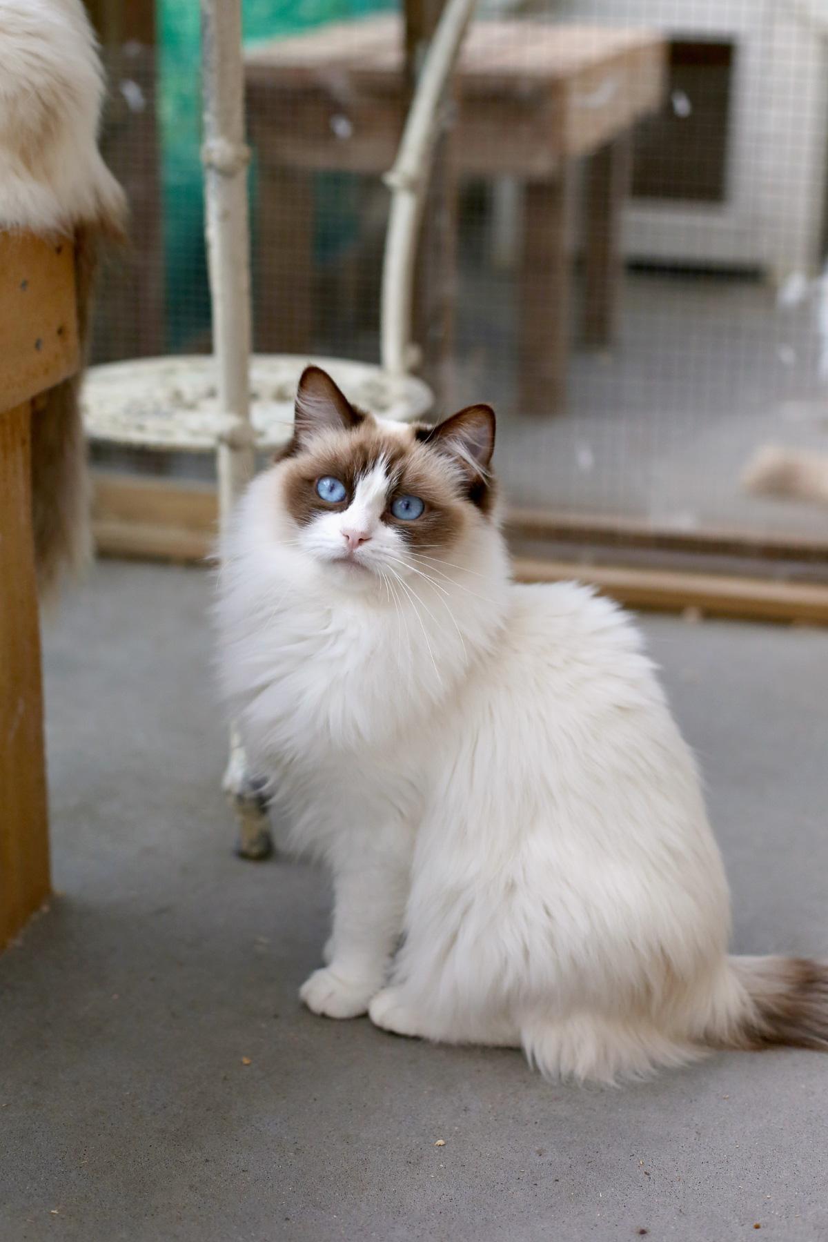 Tiffany (3)