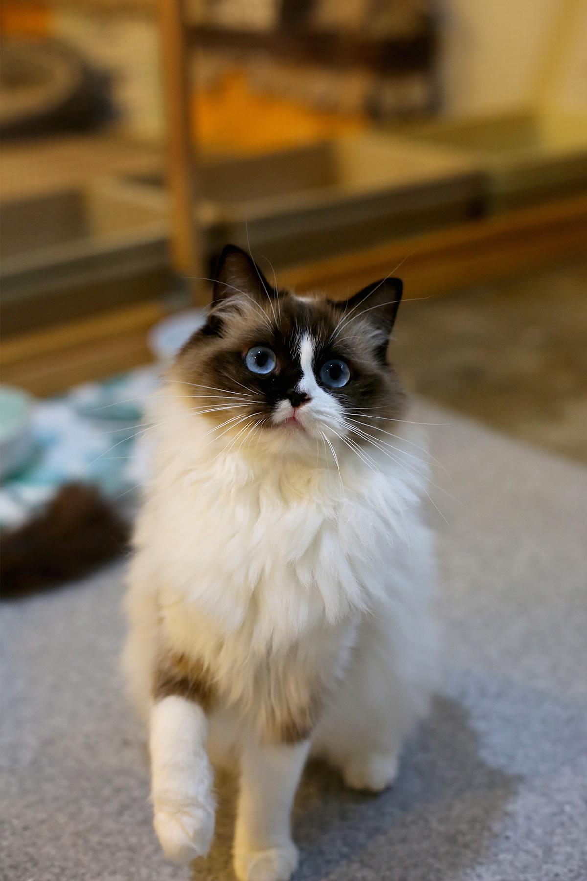 Zelda (15)