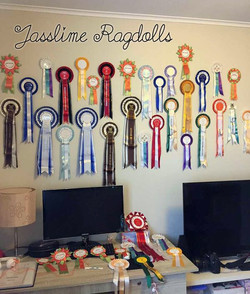 Jasslime Ragdolls