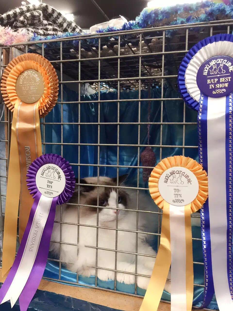 Auckland Cat Show